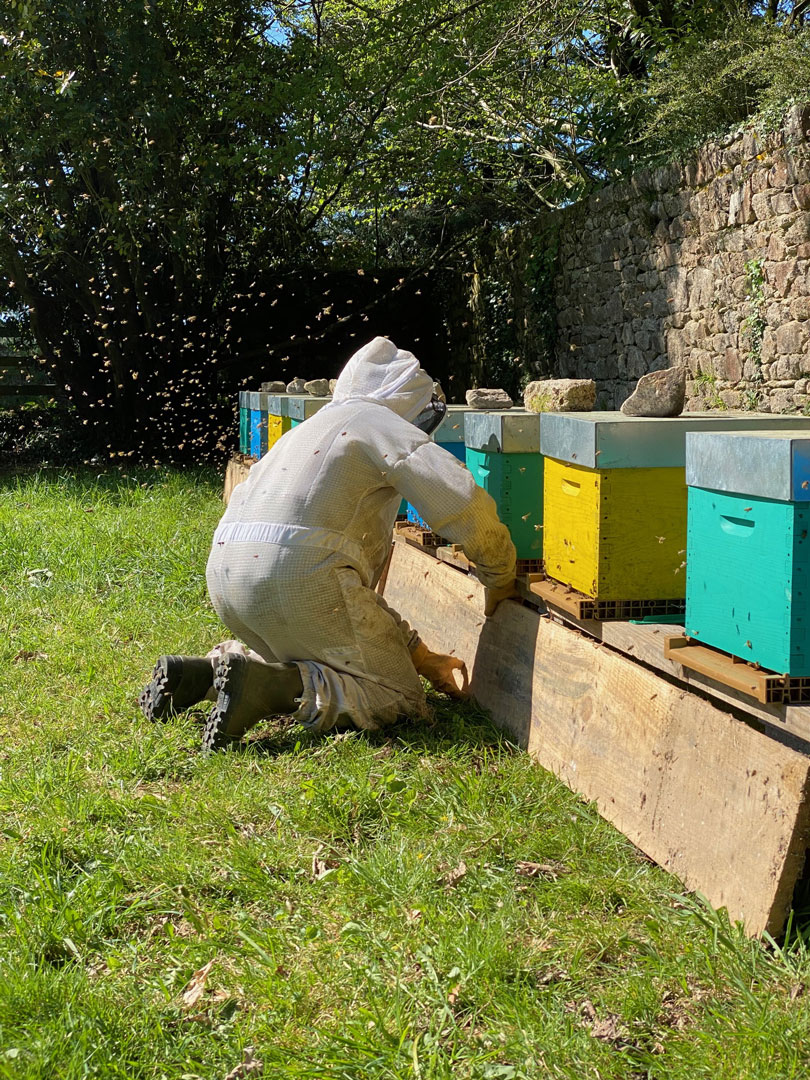 ruches-launay-apiculture