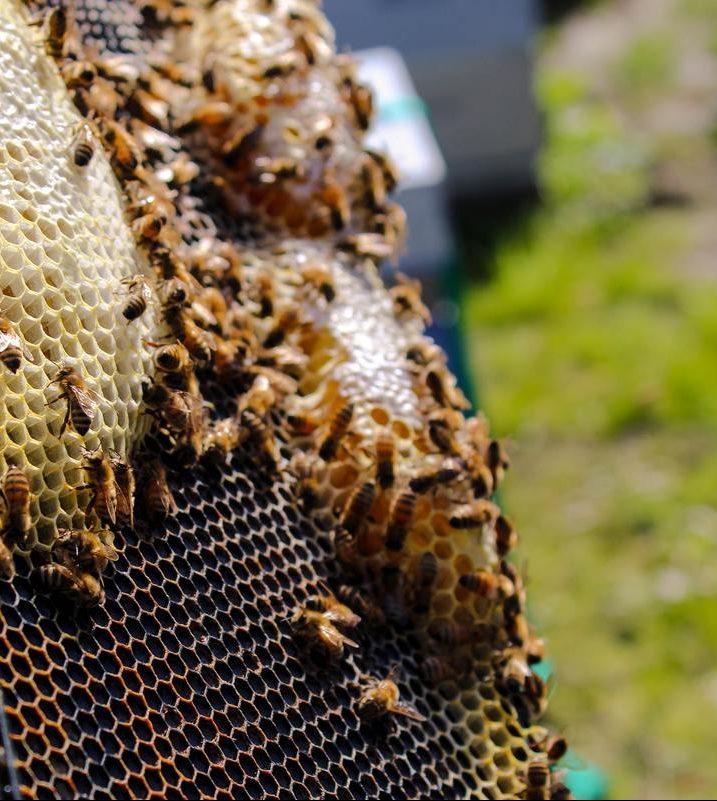 Apiculture-Ruches-abeilles