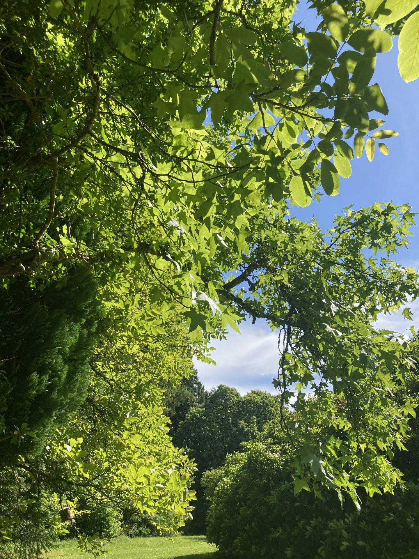 arbre sérénité évasion spiritualité