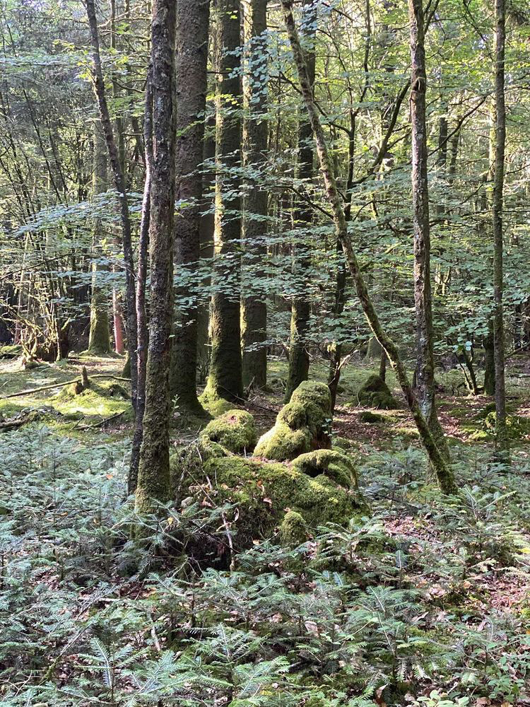 méditation avec la nature