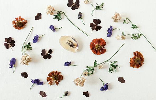 éclat de fleur et  nature